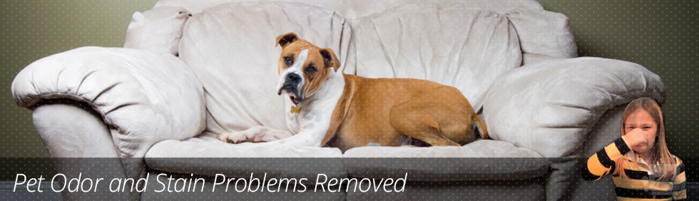 Pet Odor & Stain Cleaning
